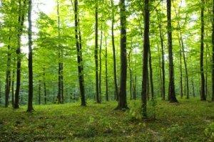 Conceitos sobre Reflorestamento