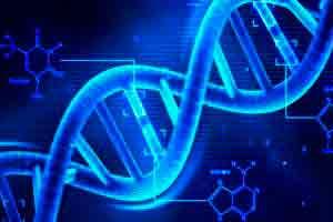 Genética e evolução humana